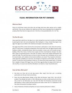 Fleas Information Sheet