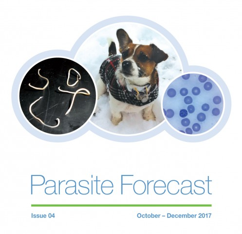 Winter Parasite Forecast: Issue 4